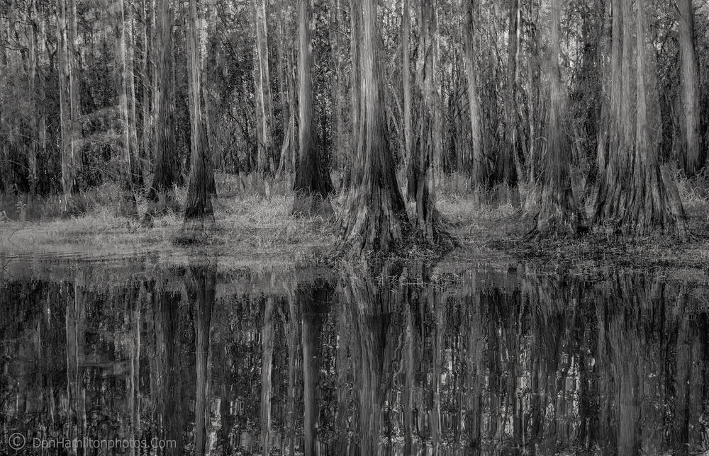 Ghostly-swamp DSF6337